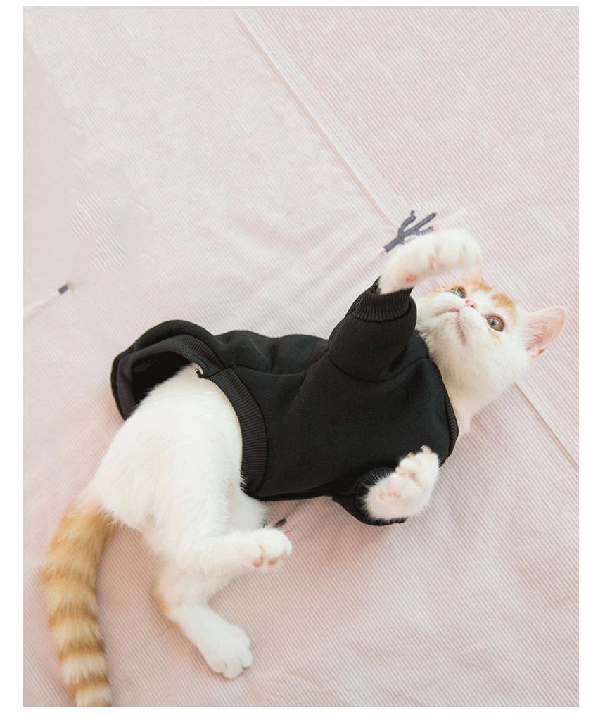예쁜 비비드 고양이 의류 고양이 외출복 고양이 옷 - 암산코리아, 13,900원, 의류/액세서리, 의류